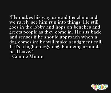 He makes his way around the clinic and we rarely see him run into things. He still goes in the lobby and hops on benches and greets people as they come in. He sits back and senses if he should approach when a dog comes in; he will make a judgment call. If it's a high-energy dog, bouncing around, he'll leave. -Connie Maute