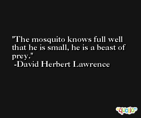 The mosquito knows full well that he is small, he is a beast of prey. -David Herbert Lawrence