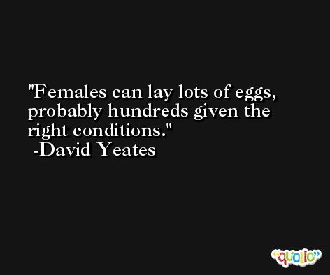 Females can lay lots of eggs, probably hundreds given the right conditions. -David Yeates