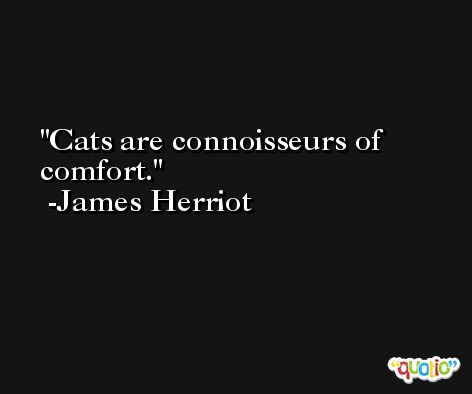 Cats are connoisseurs of comfort. -James Herriot