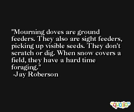 Mourning doves are ground feeders. They also are sight feeders, picking up visible seeds. They don't scratch or dig. When snow covers a field, they have a hard time foraging. -Jay Roberson