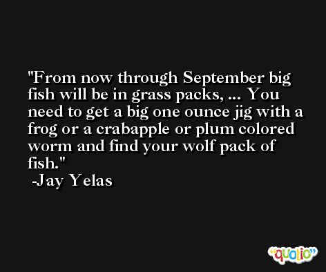 From now through September big fish will be in grass packs, ... You need to get a big one ounce jig with a frog or a crabapple or plum colored worm and find your wolf pack of fish. -Jay Yelas