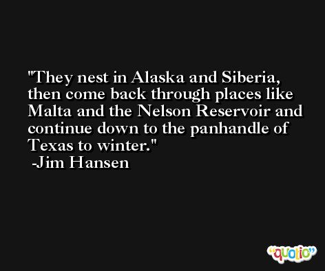They nest in Alaska and Siberia, then come back through places like Malta and the Nelson Reservoir and continue down to the panhandle of Texas to winter. -Jim Hansen