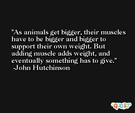 As animals get bigger, their muscles have to be bigger and bigger to support their own weight. But adding muscle adds weight, and eventually something has to give. -John Hutchinson