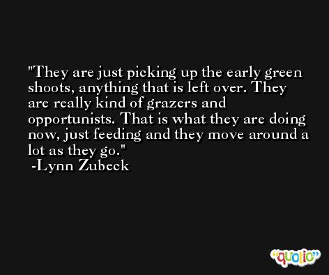 They are just picking up the early green shoots, anything that is left over. They are really kind of grazers and opportunists. That is what they are doing now, just feeding and they move around a lot as they go. -Lynn Zubeck