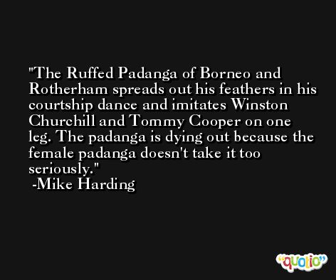The Ruffed Padanga of Borneo and Rotherham spreads out his feathers in his courtship dance and imitates Winston Churchill and Tommy Cooper on one leg. The padanga is dying out because the female padanga doesn't take it too seriously. -Mike Harding