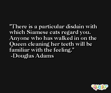 There is a particular disdain with which Siamese cats regard you. Anyone who has walked in on the Queen cleaning her teeth will be familiar with the feeling. -Douglas Adams