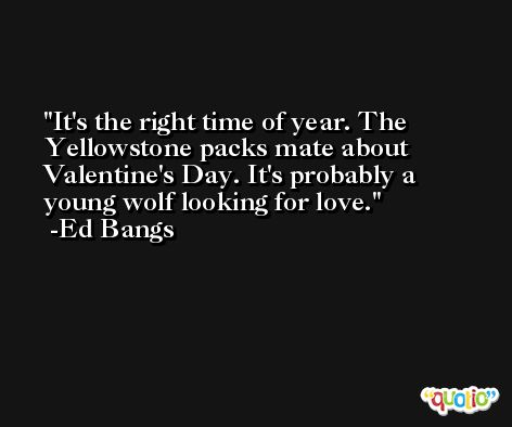 It's the right time of year. The Yellowstone packs mate about Valentine's Day. It's probably a young wolf looking for love. -Ed Bangs