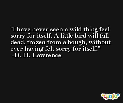 I have never seen a wild thing feel sorry for itself. A little bird will fall dead, frozen from a bough, without ever having felt sorry for itself. -D. H. Lawrence