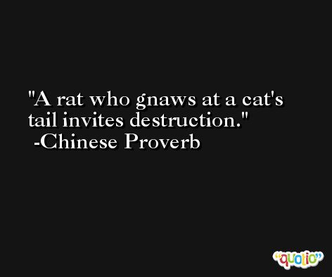 A rat who gnaws at a cat's tail invites destruction. -Chinese Proverb
